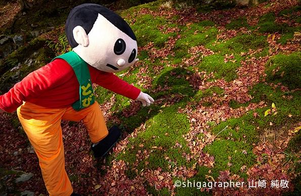 日吉大社境内のコケともみじの赤い落葉のコントラストがとてもきれいでした。とび太くんは苔マニアなのかな(笑)