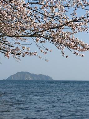 海津大崎の桜は「日本の桜100選」に選ばれています。沖に見えるのは神秘の「竹生島」。