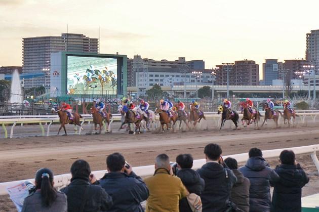 ゆるキャラたちが予想した「第7回 東京シンデレラマイル(SIII) 牝馬重賞大10レース」の模様。とび太くん予想の2枠「ビタースウィート」が1着!